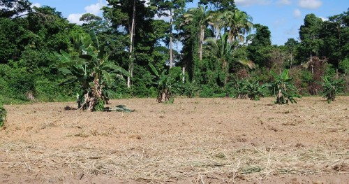 Image of an open field scattered with trees and a lush rainforest in the background in central Brazil