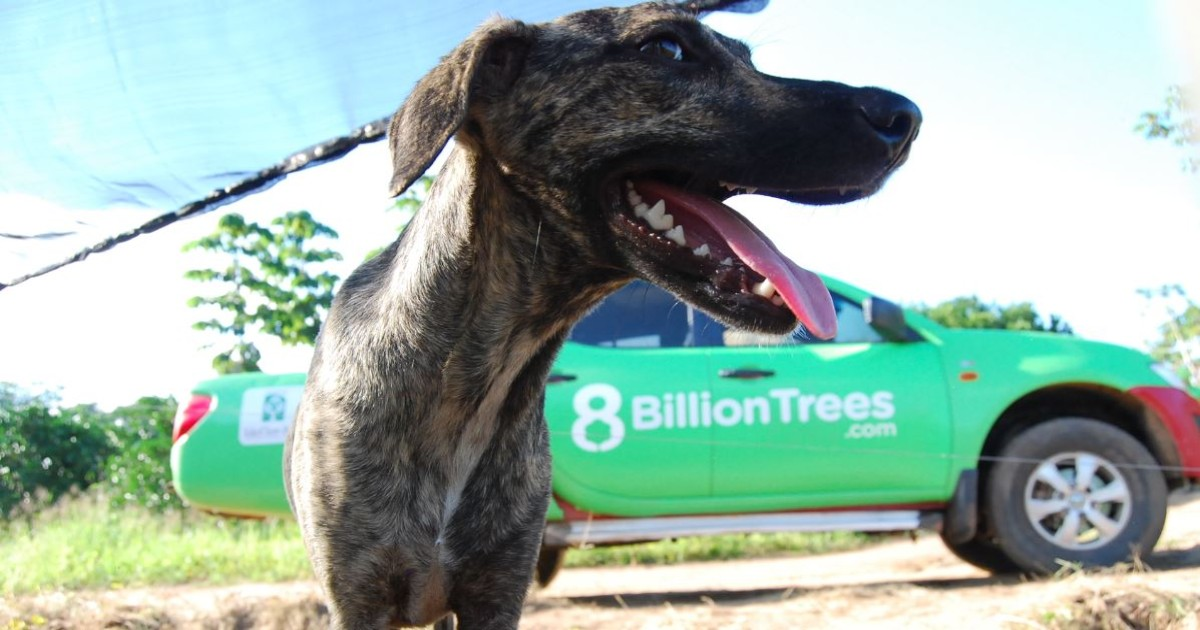 8 Billion Trees Brand Image of a dog(close up) in a nursery at remote area in the Amazon rainforest with an 8 Billion Trees truck in the background driving to the nursery to pick up native species saplings