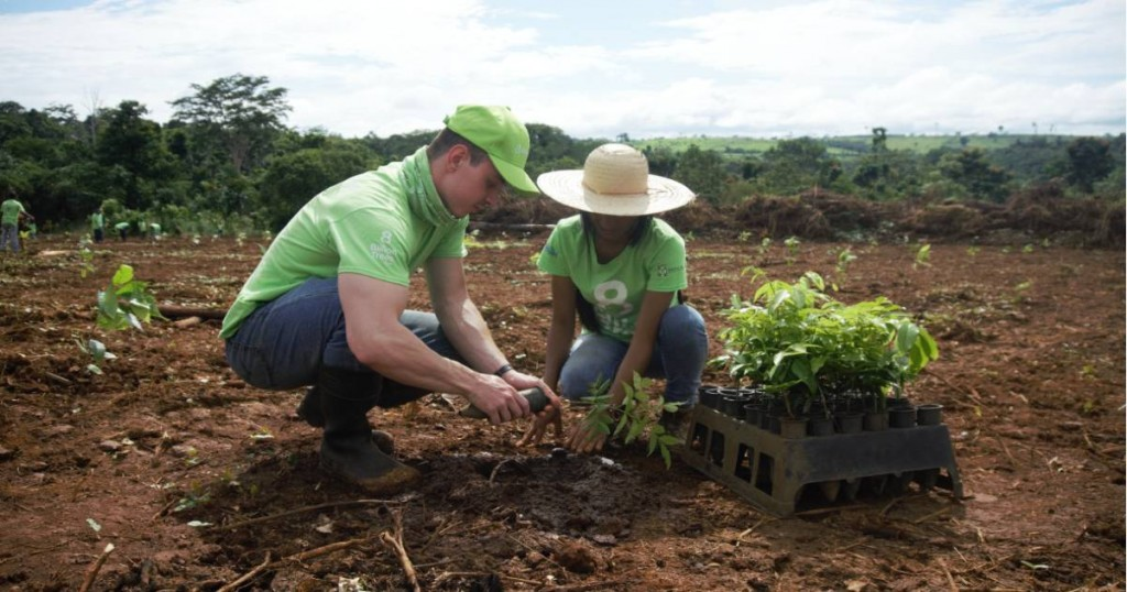 Two 8 Billion Trees team members kneeling down in a remote location of the Amazon Rainforest(Tocantins Region) digging a hole together to plant a native species sapling with a crate of over a dozen saplings waiting to be planted during a forestry project aimed at fighting climate change, habit loss, and promoting biodiversity