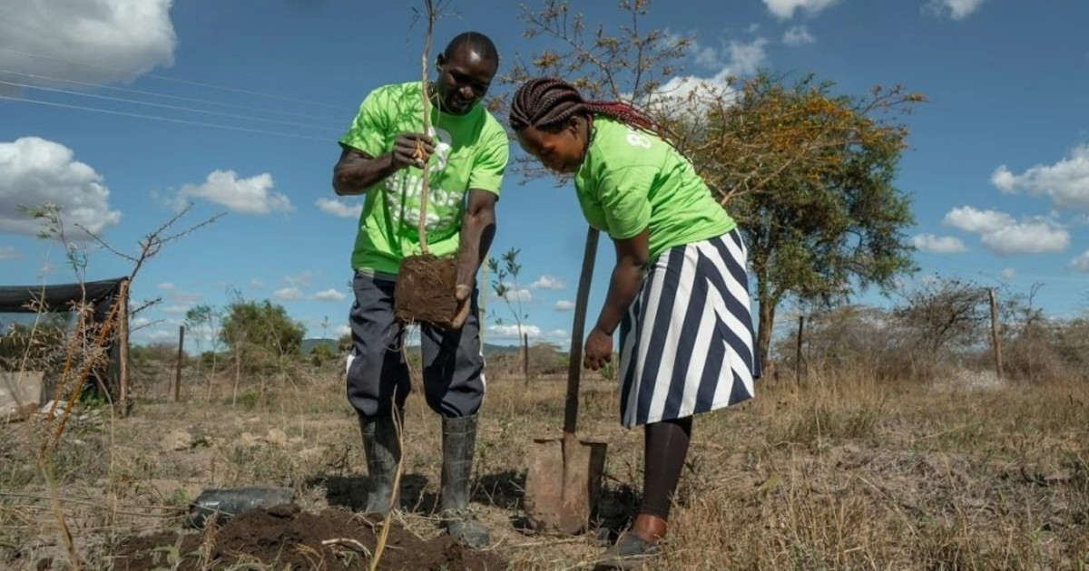 Two 8 Billion Trees team members near Naivasha Lake in Kenya working together to plant a tree in an area that was previously destroyed for wood fuel and agricultural development.
