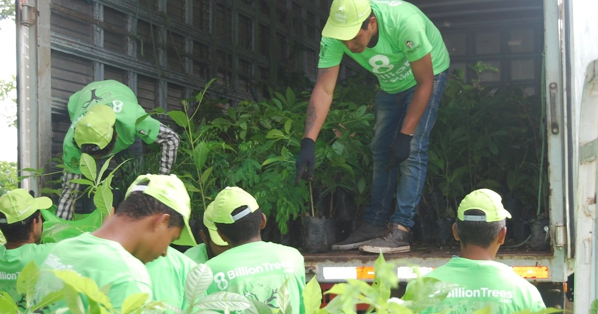 To protect the Amazon Rainforest's biome and maintain proper biodiversity of the local region of Tocantin the 8 Billion Trees (a brand) team loads small trees into a truck for planting (reforestation).