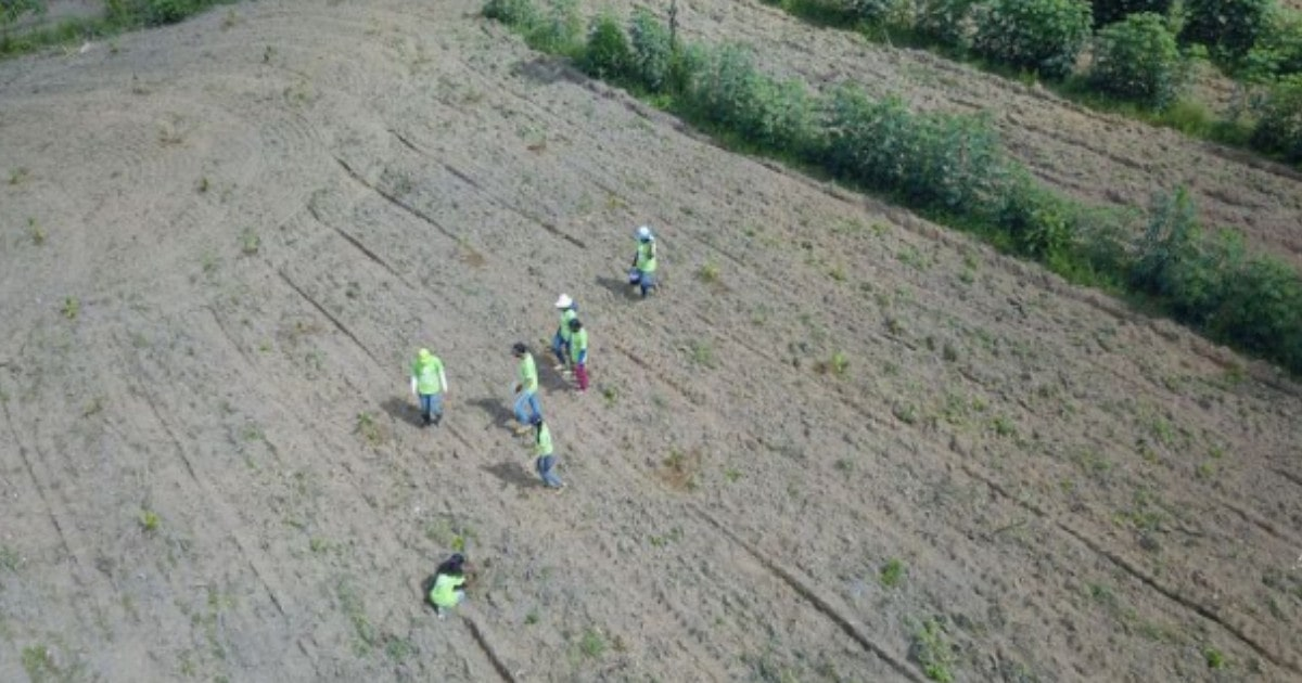 A drone shot of 7 people at a remote planting site in Tocantins Brazil