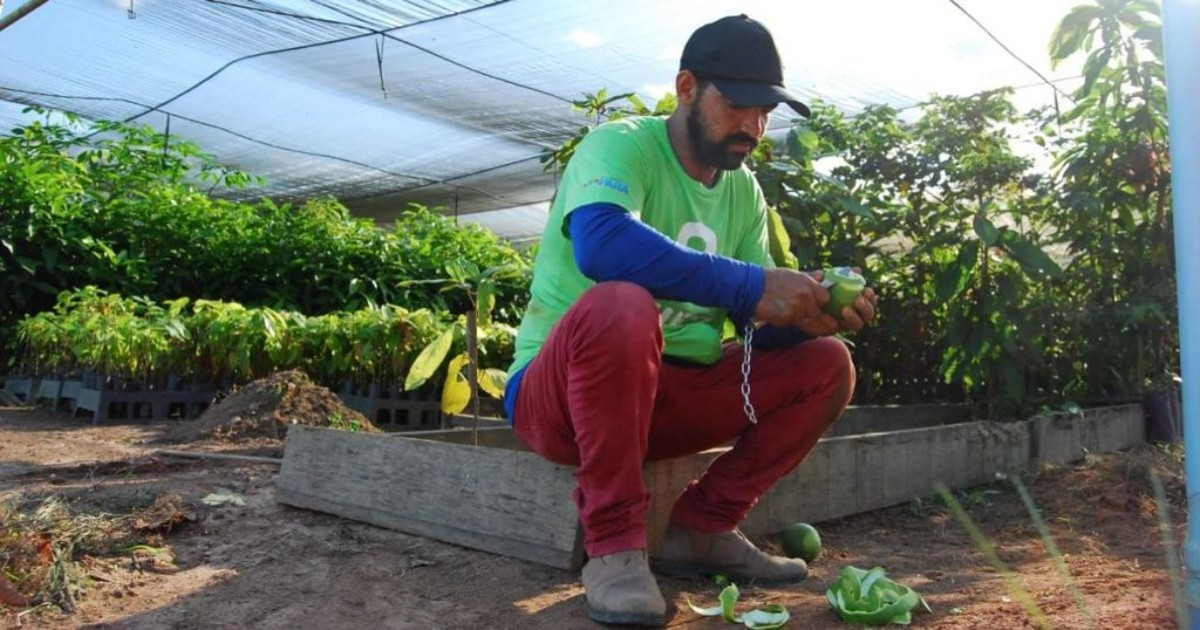 8 Billion Trees team member wearing green 8 Billion Trees brand t-shirt sitting down peeling a lime with a knife during lunch break inside a nursery filled with hundreds of various native species saplings in the Amazon, area that supports over 1,000 tree species