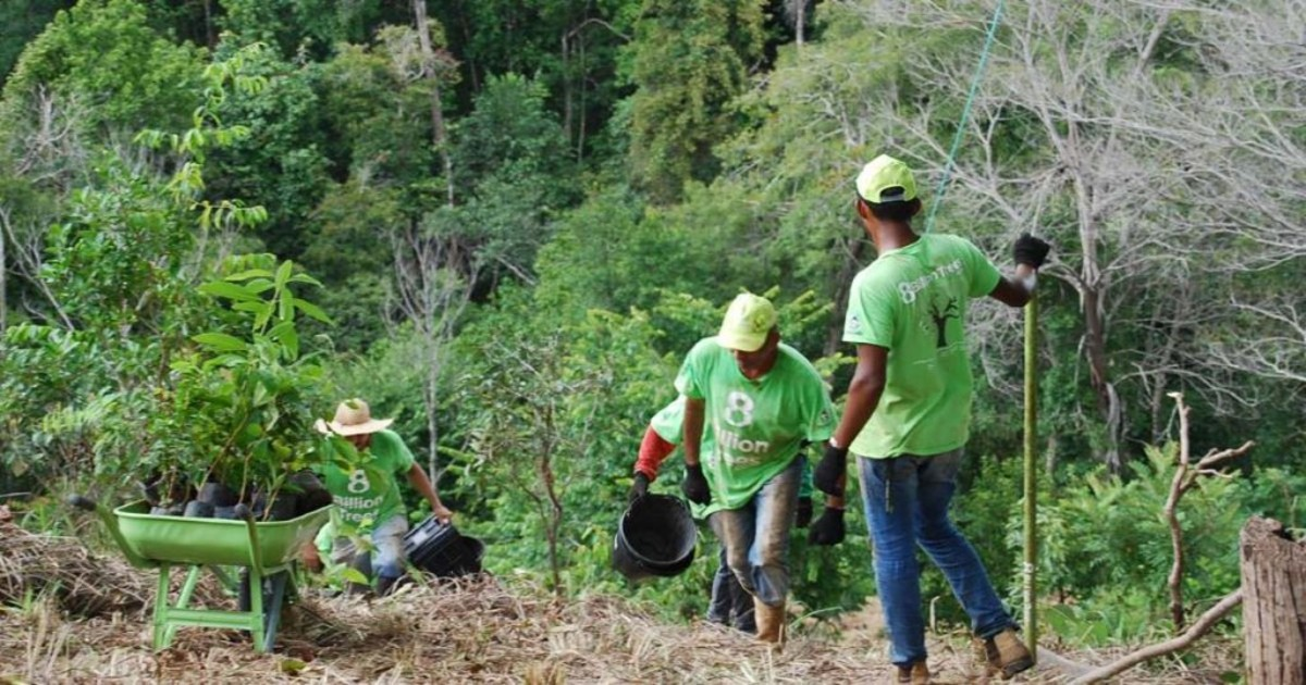 8 Billion team members wearing 8 Billion trees brand t-shirts carry buckets up a steep hill with a farming wheelbarrow at the top of the hill full of native species saplings in a remote forest deep in the Amazon