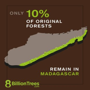8 Billion Trees Visual Infographic of the Island of Madagascar(Island in Indian Ocean) showing the devastating effects of deforestation as only 10% of the original forests remain, highlighted in green
