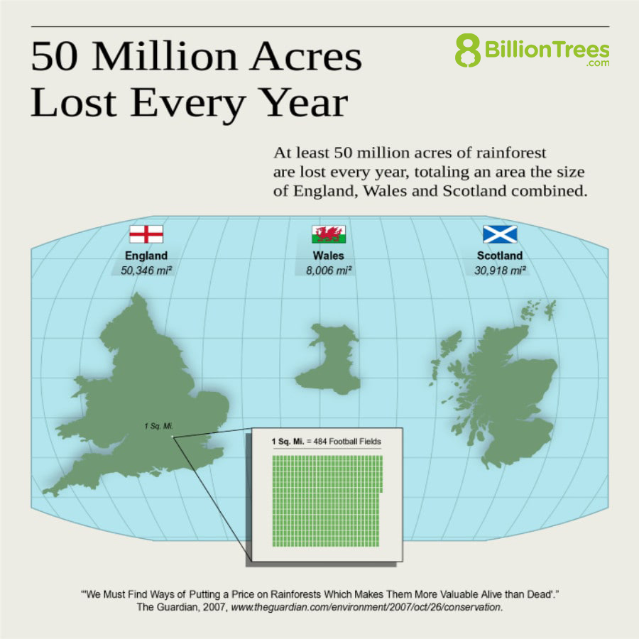 """An 8 Billion Trees graphic image showing """"at least 50 million acres of rainforest are lost every year, totaling an area the size of England(50,346 square miles), Wales(8,006 square miles) and Scotland(30,918 square miles) combined."""" with a side-by-side comparison of each country's size in addition to a visualization that demonstrates 1 square miles equals approximately 484 football fields."""