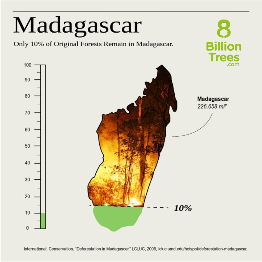 A visual aid in the form of a bar graph showing that 90% of Forests in Madagascar have been destroyed and on the bottom of the image you can see the data was sourced from NASA's Land-Cover and Land-Use Change Program website.