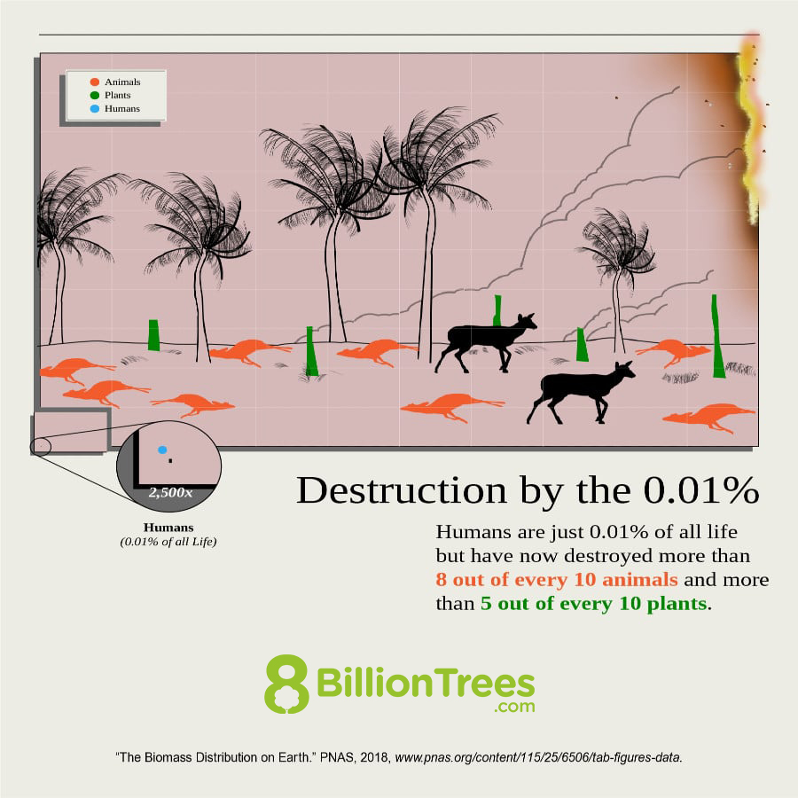 A graphic image showing humans represent less than .01% of all life on earth but have destroyed 8 out of 10 animals and 5 out of every 10 plants. The image provides a powerful visualization because 80% of the animals and 50% of the plants are lifeless and lying on the ground.