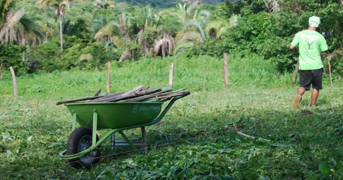 8 Billion Trees farming wheelbarrow with 8 Billion Trees Logo with team member and forest in the background at the ecologically dense forest of the Amazon region of Tocantins