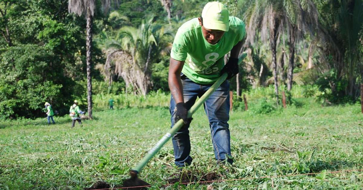 8 Billion Trees team member in green 8 Billion Trees brand t-shirt bends over to dig a hole with a hoe in an open humid field during a forestry project in the heart of central Brazil, State of Tocantins