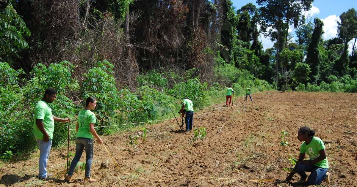 8 Billion Trees surveying and marking off planting site with rope in an open field surrounded by tropical rainforest in central Brazil State of Tocantins, targeted for forestry projects as this region displays vast biodiversity and diverse ecosystems.