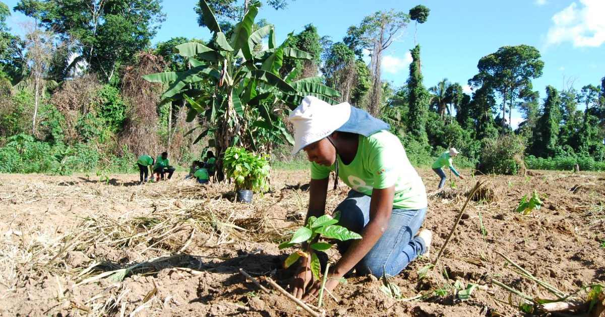 To mitigate climate change an person with an 8 BIllion Trees t-shirt kneels down to plant a sapling (reforesting) at a planting site in Tocantins Brazil
