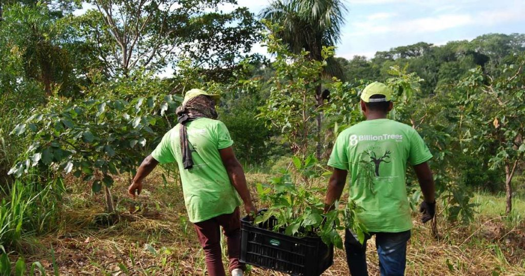 Two men in the Amazon Rainforest carrying seedlings to a forestry planting site operated by 8 Billion Trees (a provider of carbon offsets).