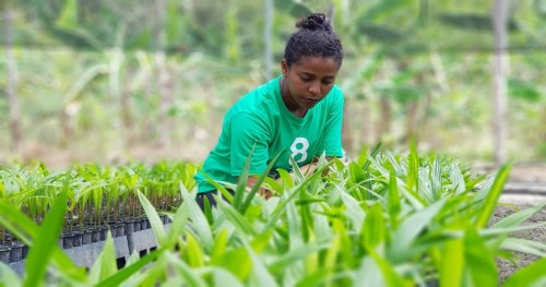 We get many frequently asked questions (FAQ) about our planting projects and carbon offsets.