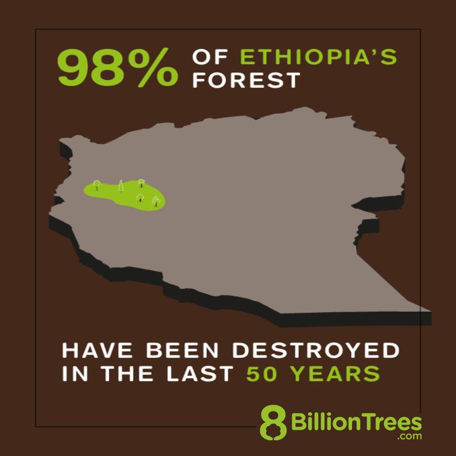Using carbon offsets for flights reduces deforestation.