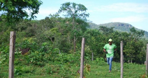 8 Billion Team member wearing 8 Billion Trees brand t-shirt and hat runs through a field around a fence with a forest in the background deep in the central Brazilian state of Tocantins