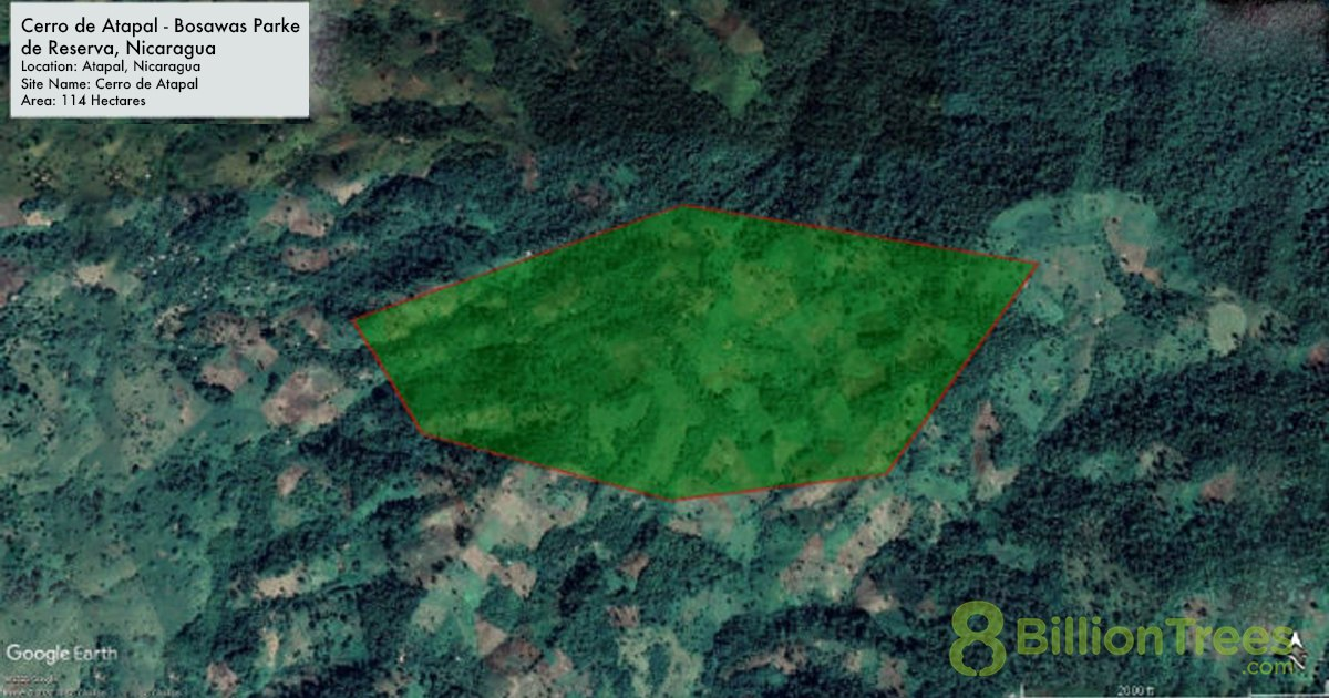 Map showing the coordinates of an 8 Billion Trees tree planting site in Cerro de Atapal