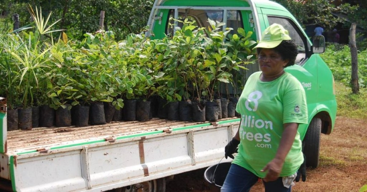 Image of an 8 Billion Trees team member wearing a green 8 Billion Trees brand t-shirt and hat walking with a bucket with a green flatbed truck in the background hauling dozens of native saplings ready to be planted at a forestry project in the remote Amazon Basin