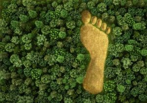 Image of an orange outline of a massive footprint in the middle of a rainforest viewed from a bird's eye view