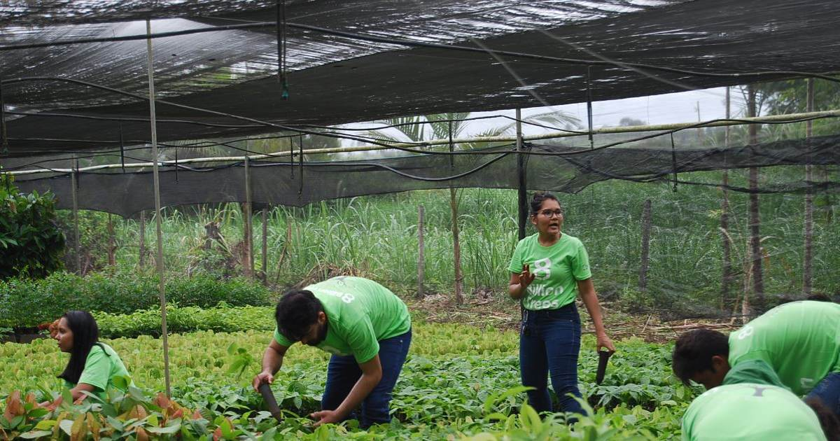 Image of five 8 Billion Trees team members with 8 Billion Trees green t-shirts kneeling over working inside a nursery with hundreds of native saplings in central Brazil outside the Amazon Basin