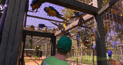 Jon Chambers founder of 8 Billion Trees looking at parrots in an animal sanctuary
