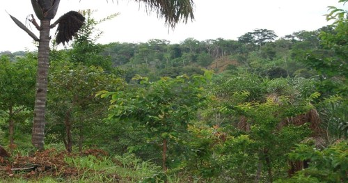 Image of the dense rainforest viewed from the top of a hill in the remote location of the Amazon Basin, State of Tocantins Brazil