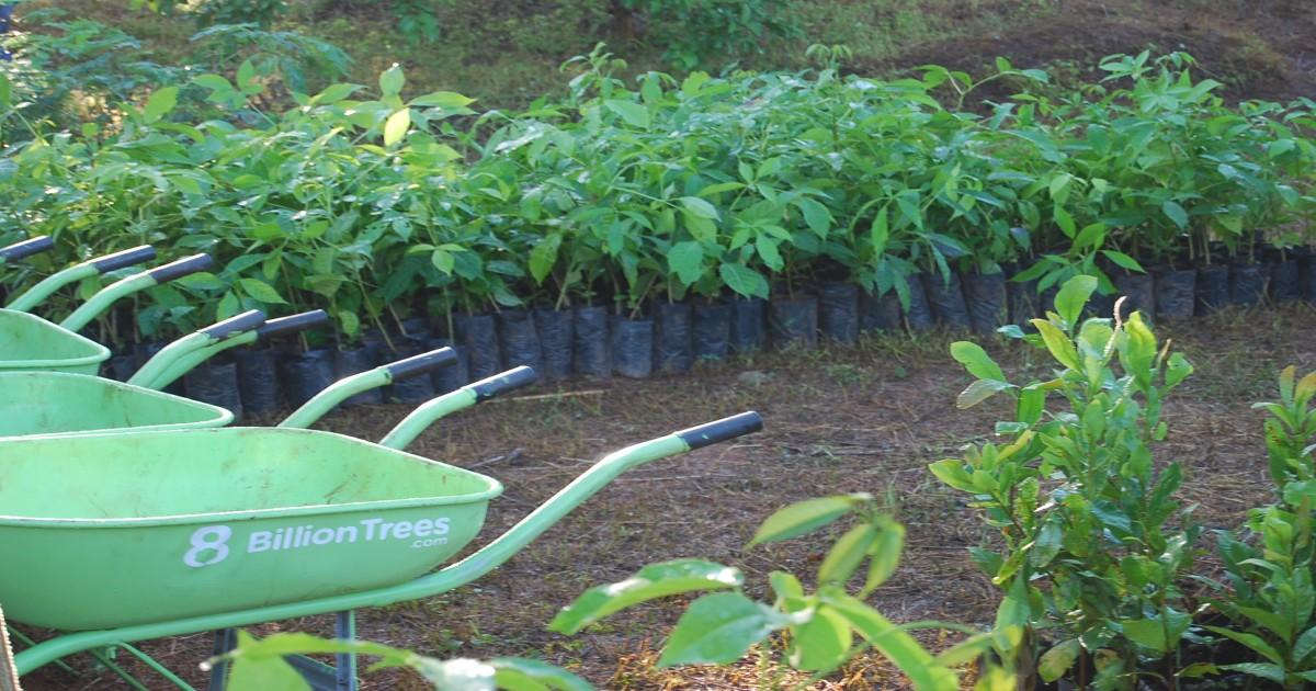 Imagen de una carretilla con las letras 8 Billion Trees con docenas de árboles pequeños listos para ser plantados en el bosque de las Amazonas en el estado de Tocantins en Brasil