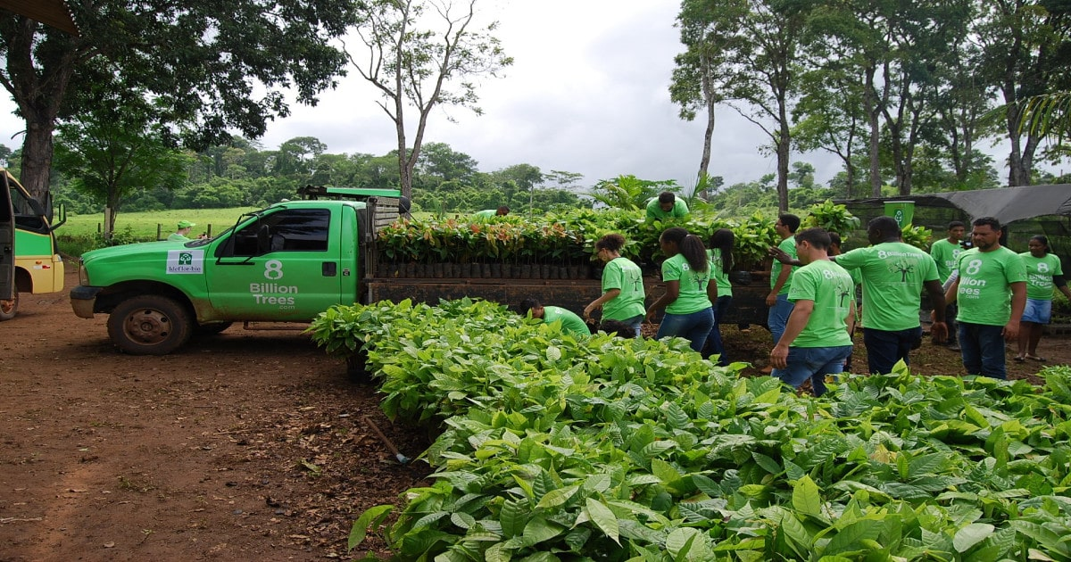 The 8 Billion Trees team loading saplings on to a truck in a nursery located in the Amazon Rainforest
