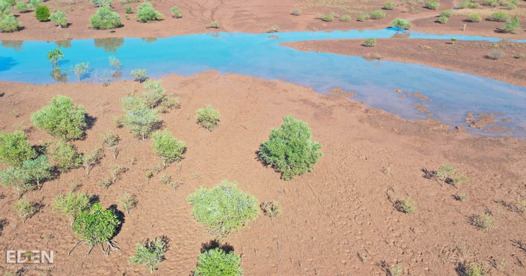 A drone shot of young trees at a planting site in Madagascar