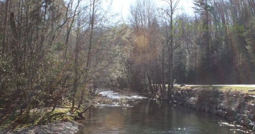 Crystal clear river in Great Smoky Mountains National Park, early spring buds on deciduous trees.