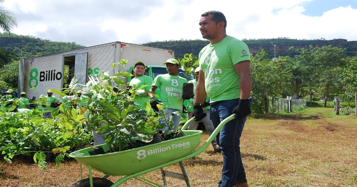 Team leader rolling a wheel barrow of saplings to a remote planting location