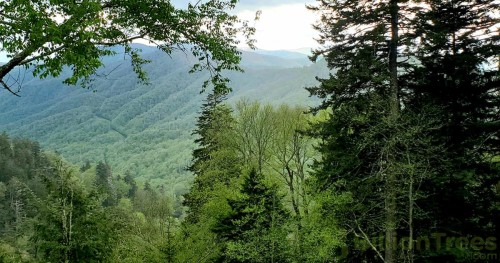 An overlook of the smoky mountains in Tennessee