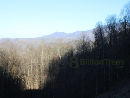 Overview of of mountains with leafless trees
