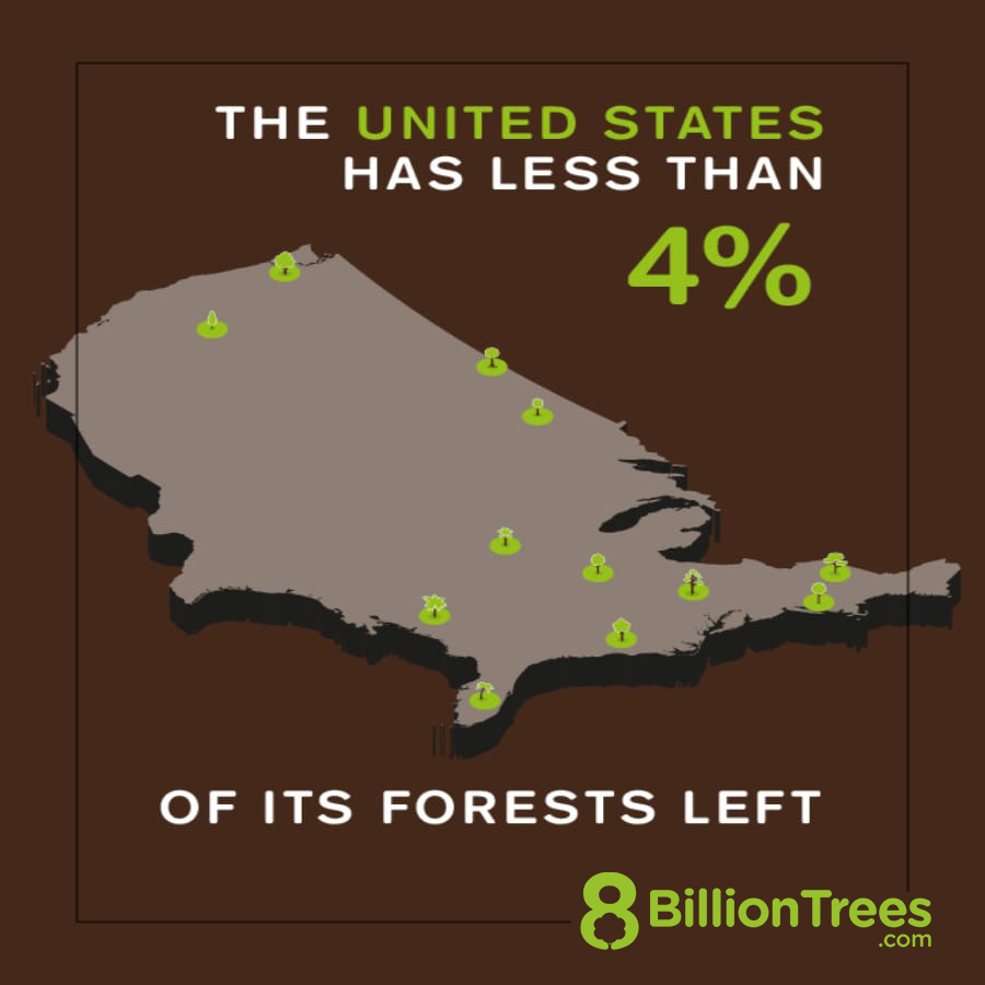 8 Billion Trees brand graphic image illustrating the loss of forests in the United States with a map of America and green trees reflecting forests lost
