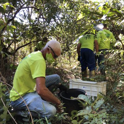 8 Billion Trees team members collect sucupira seeds in the Braizilian forest.