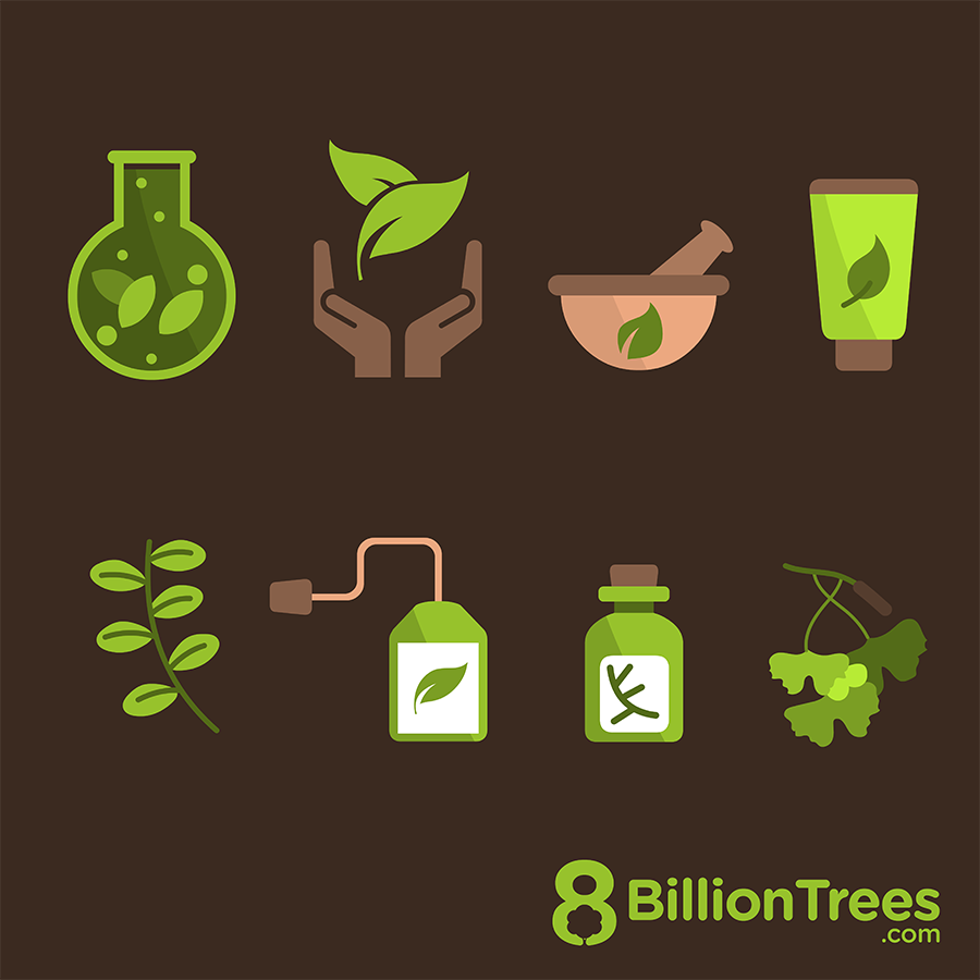 Trees have long provided the medicines we need to stay healthy and heal many illnesses.