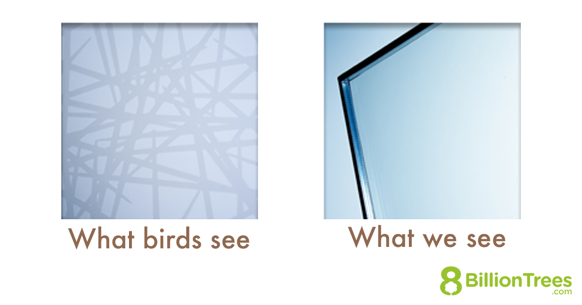 Close up view of what birds see in specially made glass, versus what people see.