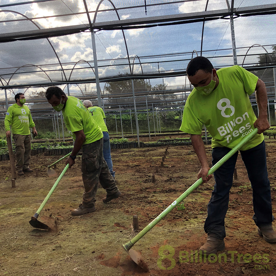 8 Billion Trees team members work the soil in a nursery for seedlings.