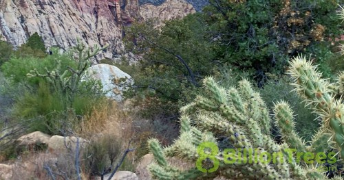 A cactus and other vegetation with rock in the background, at Sequoia National Park, with an 8 Billion Trees watermark