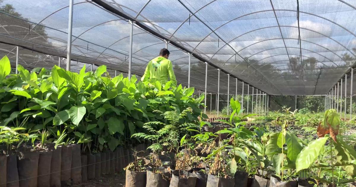 Native saplings growing in 8Billion Trees nursery in Tocantins, Brazil.