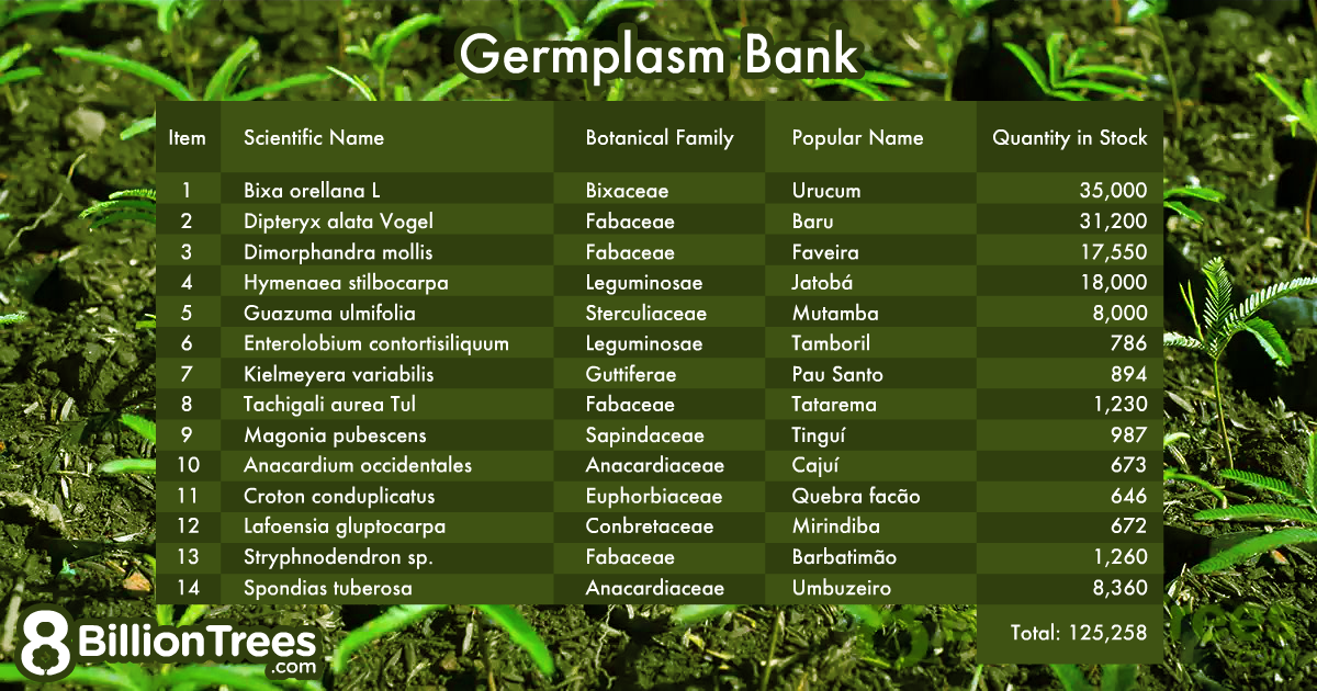 Germplasm bank amounts showing species and number of plants nbeing used to reforest the Amazon rainforest.