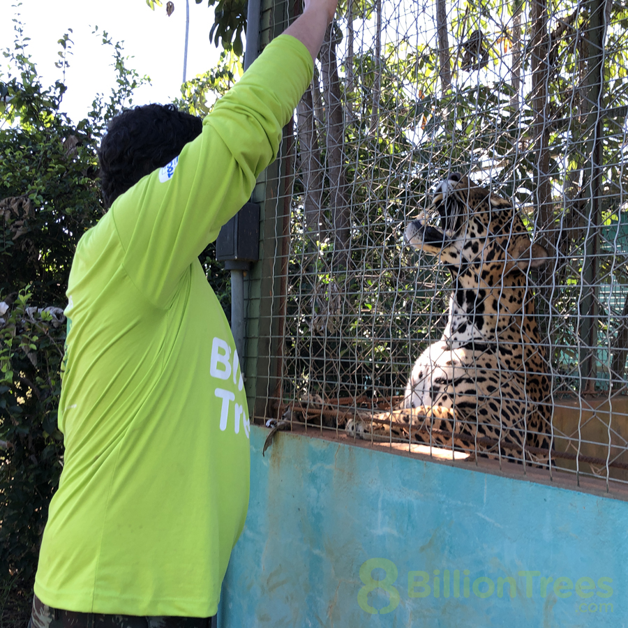 Tocantins Wildlife Center jaguar.