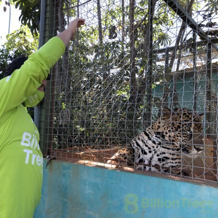Tocantins Fauna Center with Cefau the jaguar looking away.