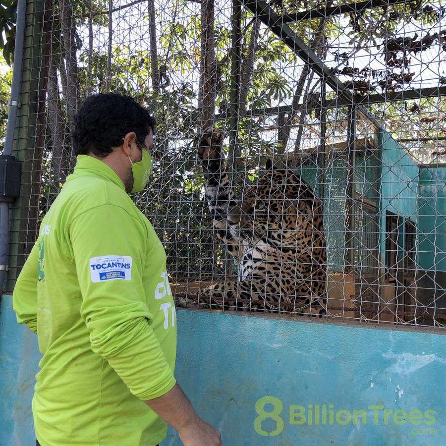 Tocantins Fauna Center with Cefau the jaguar.