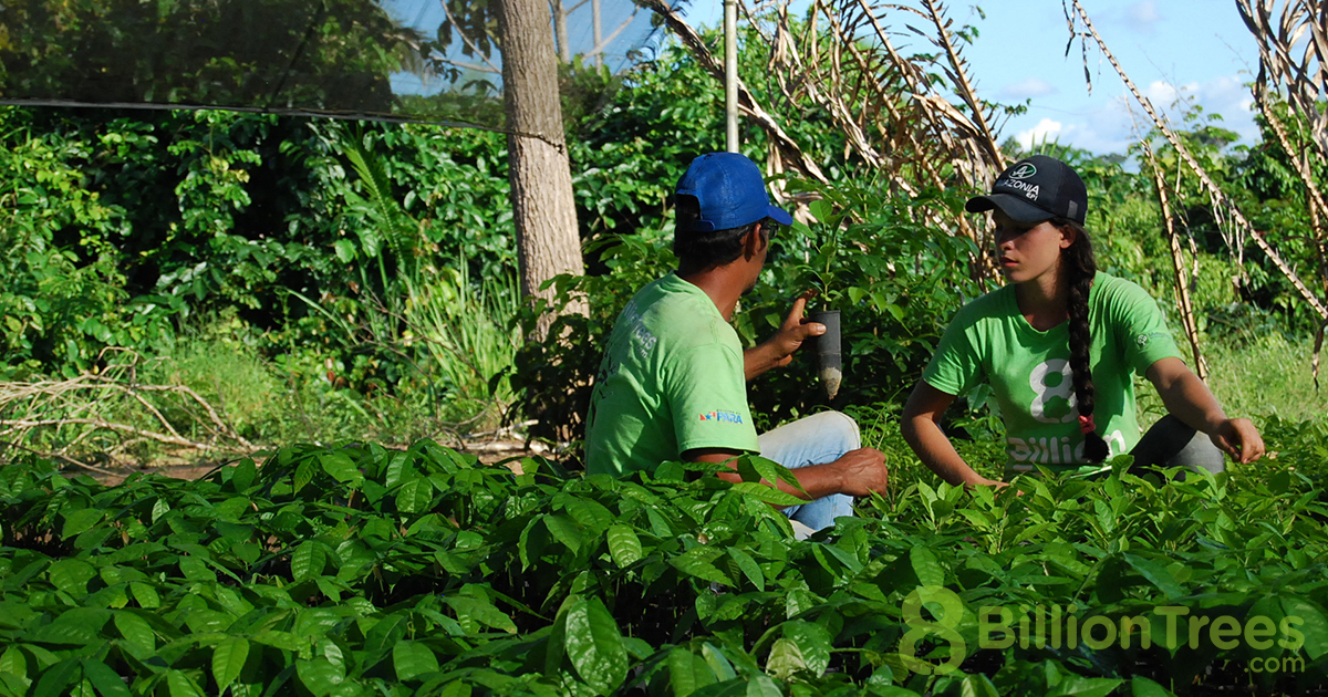 Caring for the native saplings in the Tocantins, Brazil nursery.