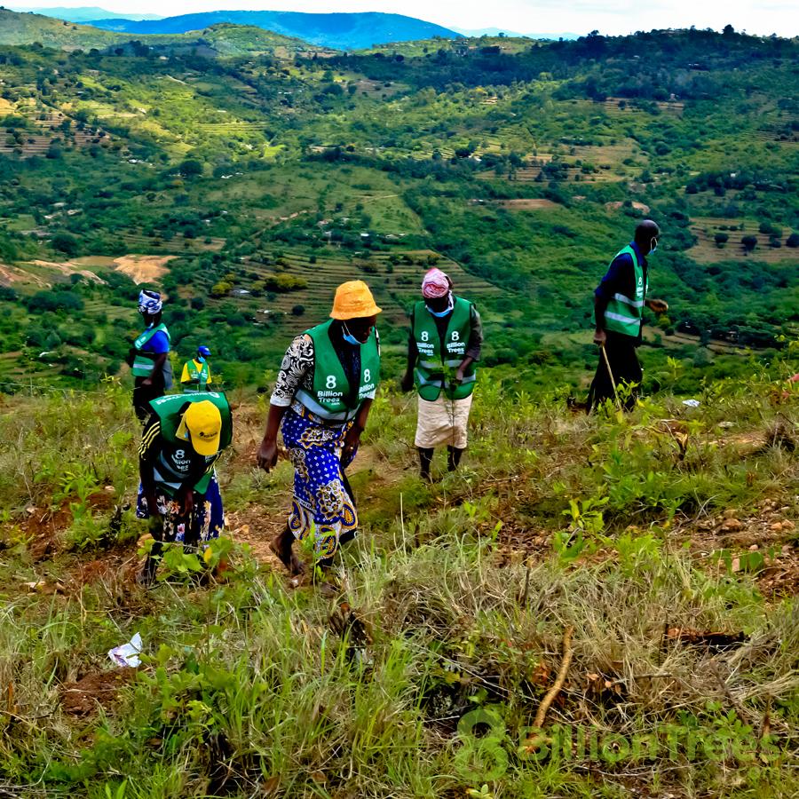 8 Billion Trees team plants trees in Kenya.