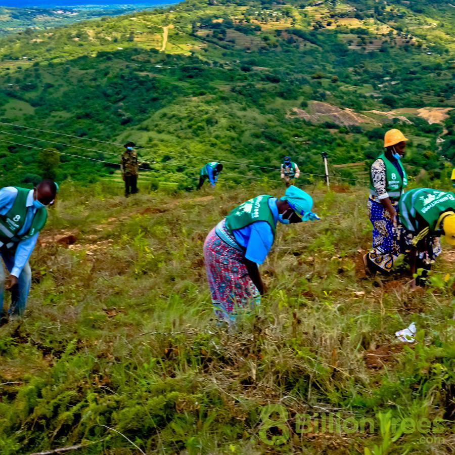 Teams planting trees in Kenya.
