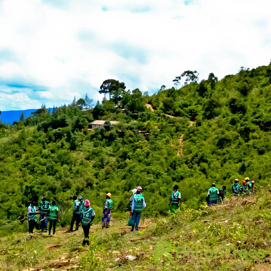 Kenya reforestation efforts by 8 Billion trees volunteer team.