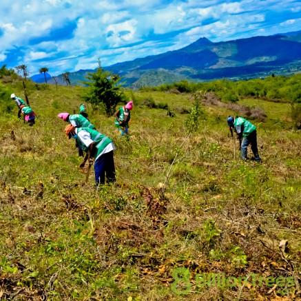 Teams of volunteers plant trees on a hillside in Kenya.