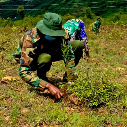 Carefully planting a native sapling in Kenya.